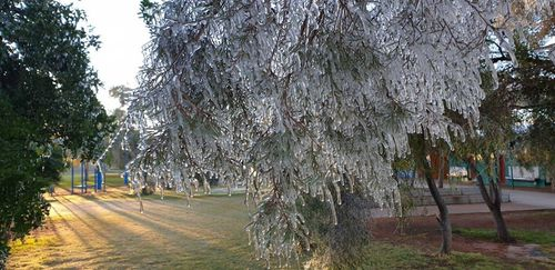 Those trees at Ross Park Primary School in Alice Springs that weren't coated in icicles had a thick cover of frost creating a winter wonderland effect.