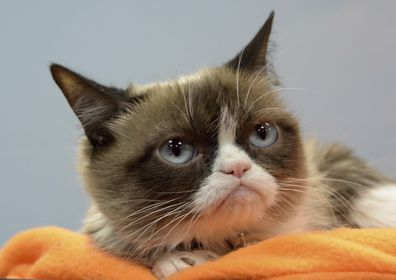 Grumpy Cat aka Tardar Sauce has died at home in Arizona at the age of seven due to complications from a urinary tract infection.