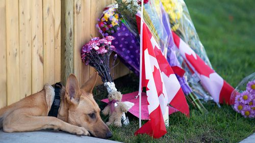One of Cirillo's dogs waits at the family home.