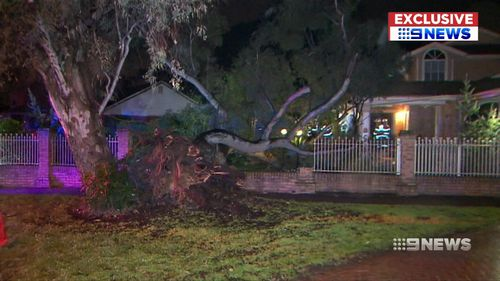 An underground leak caused a tree to fall on an Adelaide home.