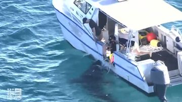 Cottesloe Beach was closed and drumlines deployed to catch and tag a five metre monster shark that's been lurking off the Perth coast.