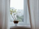 5 indoor plants that can survive with nearly no light