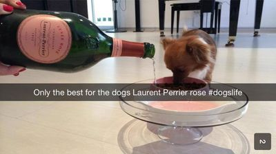 We hope this dog is not being given real champagne, no matter how expensive. (Private School Snapchats)
