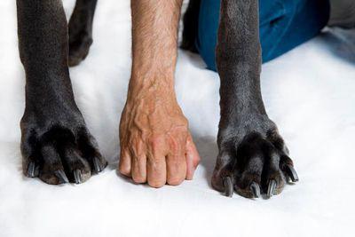 Big paws.