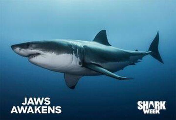 Jaws Awakens