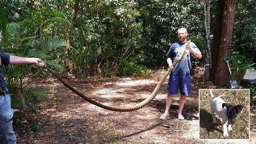 Giant python strangles woman's pet dog in Queensland