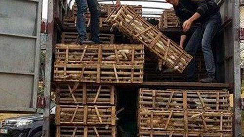 Three tonnes of cats were found inside the truck. (Kien Thuc)