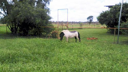 This grazier has seen her pastures transformed from bare earth to lush grass. (Tessa Pemble)