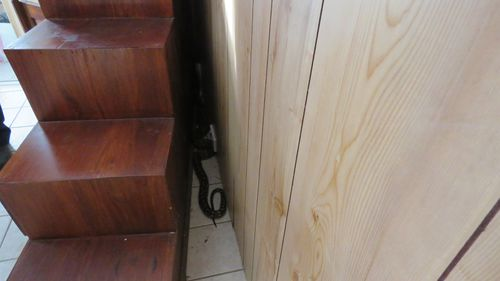 The couple are unsure as to how the snake managed to get into the house.