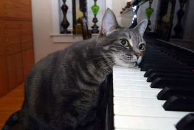 Talented pianist Nora is the Beethoven of the musical cat world.