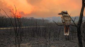 Haunting bushfire scene unveiled in global photo contest