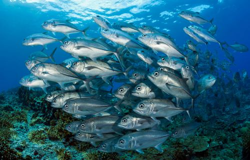 US Navy wants to turn fish into underwater spies
