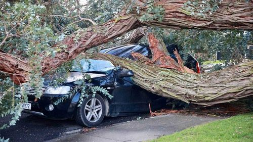 A tree has fallen onto a car in the Auckland suburb of Mt Roskill.