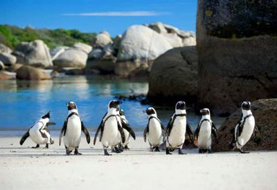 12. Boulders Beach – Cape Town, South Africa
