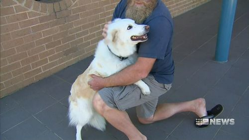 Tim Barrot's Holden Colorado was stolen from a property in Mentone when he was quoting a roofing job for a client. His dog Medusa was still in the back.