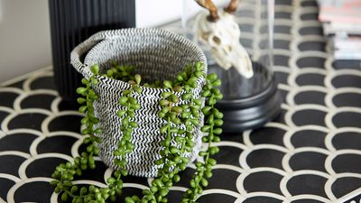 Splashes of greenery helped to bring life to the room.