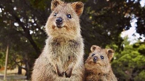 Harry and Meghan could be mingling with quokkas later this year if the West Australian government has its way.