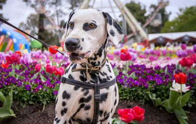 Floriade Dogs Day Out