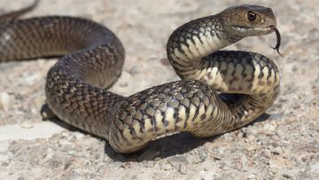 'Assume they will kill you': Warm weather sparks snake season start