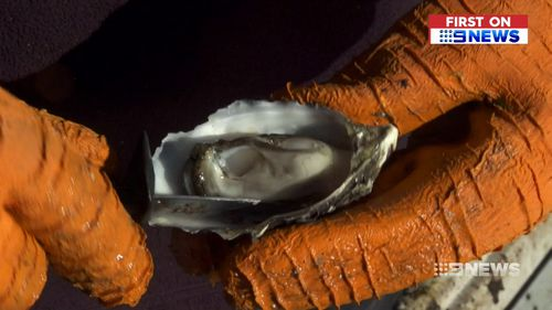 Hank is destined to be the town's- renowned for its oysters- next famous export. (9NEWS)