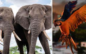 Coronavirus tourism slump offers peaceful recovery for animals