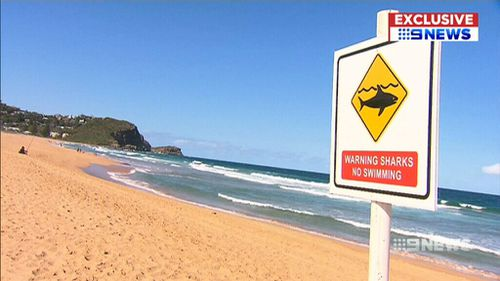 Charlie Fry spotted the shark about 30 to 40 metres into the water at Avoca Beach. (9NEWS)