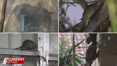 The 'rat house' leaving neighbours worried about their health