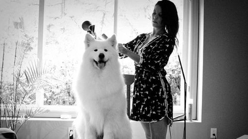 Zero the Samoyed getting ready for the wedding ceremony. (Stephanie Steiner Photography)