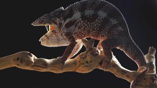 Reptilian Creature In Thailand & More