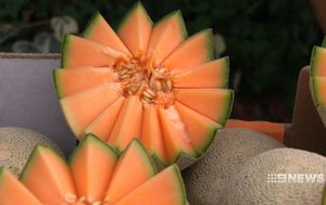 Heavy rain, dust storms blamed for deadly contaminated melon
