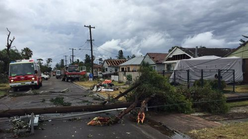 Powerlines brought down in Kurnell. (Twitter)
