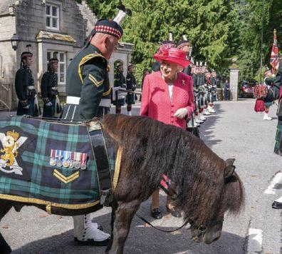 Queen Elizabeth greeted by Shetland pony in Scotland.