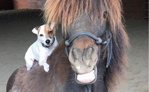 Dally and Spanky are inseparable. Image: Facebook