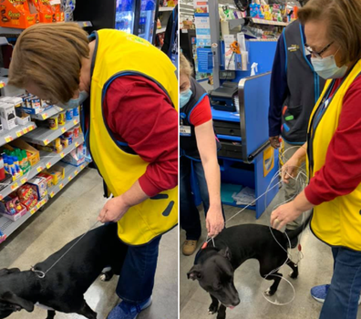 Dog shows up at Walmart reunited with owner