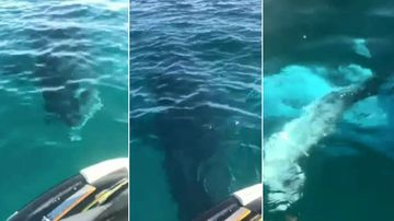 The whale came a bit too close for comfort to this jet ski rider.