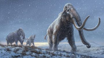 Mammoths and other extinct Ice Age giants clung on longer than previously thought