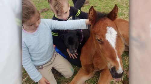 Foal Holly was snatched from the Carrum Downs property on Monday.