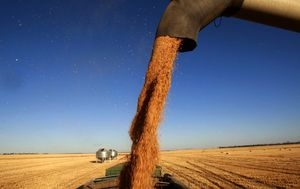 Australia to seek alternative barley export markets after China hits farmers with punitive tariffs