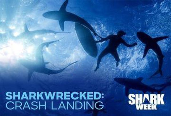 Sharkwrecked: Crash Landing