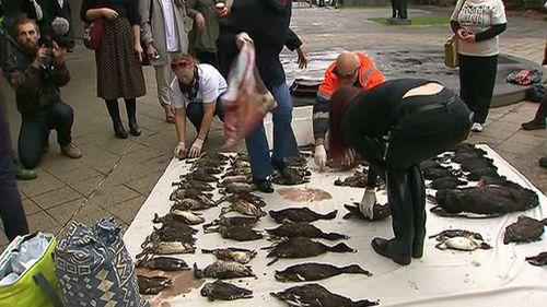 Dead birds dumped at Victorian Premier's office