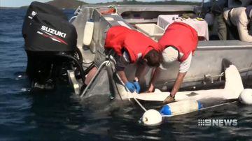 Environmental activists demand shark drum line trial be abandoned