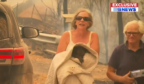 Lewis the Koala dies weeks after rescue from Australia bushfire