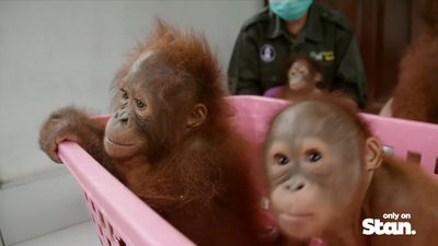 The weird and wonderful classes of Orangutan Jungle School