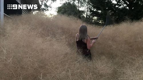 The homeowner is no match for the sea of tumbleweed in her backyard. (Copyright: 9NEWS)