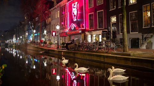Apart from a few swans Amsterdam Red Light District, with the Casa Rosso erotic theatre, center, is deserted in Amsterdam.