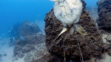 Drowned turtle photo highlights Gold Coast's fishing line problem