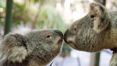 Brisbane River Koala park