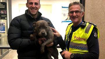 Owners reunited with beloved dog stolen by brazen thief