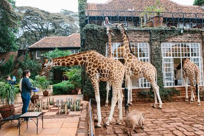 <strong>Giraffe Manor, Kenya</strong>