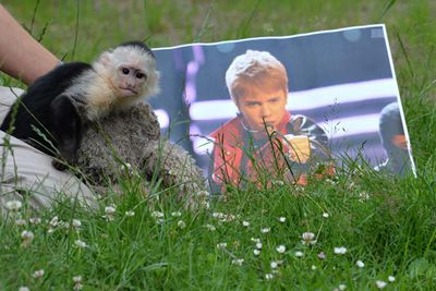 March 2013 till now: Bieber tried to smuggle his pet capuchin, Malley, into Germany without the right papers. German officials quarantined Mally and waited for him to collect the monkey. It didn't happen so they donated him to a wildlife park, and asked Justin to pay a bill of $1500 for the monkey's care during the waiting time. Justin hasn't paid up yet, and has since bought a new monkey.<br/><br/>Image: Getty